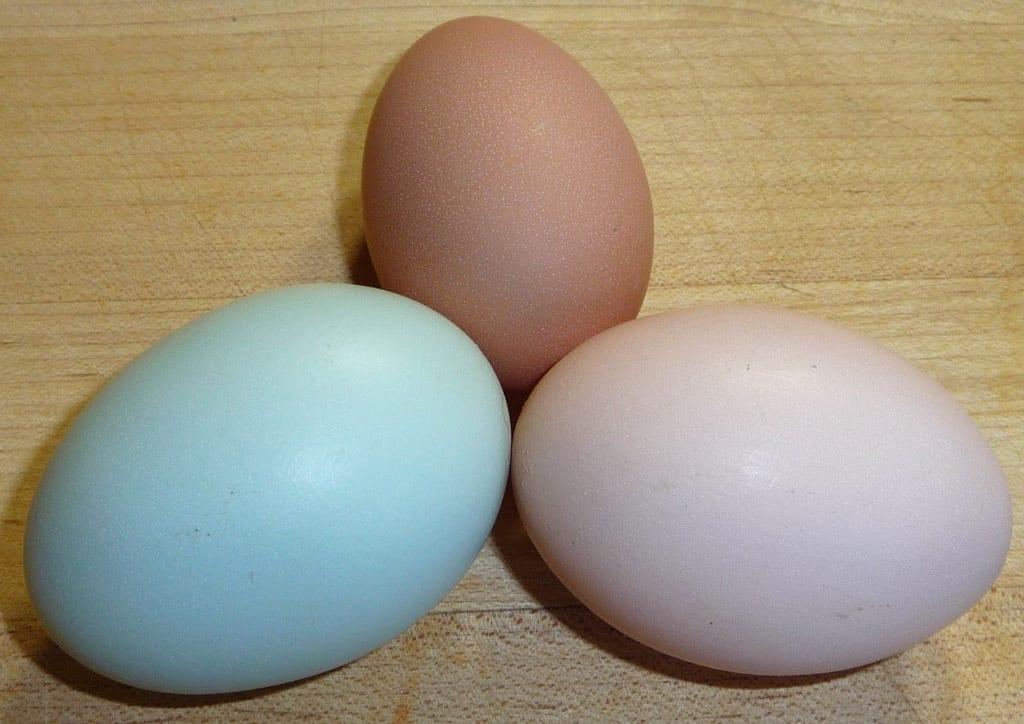 On my Egg High Horse Again